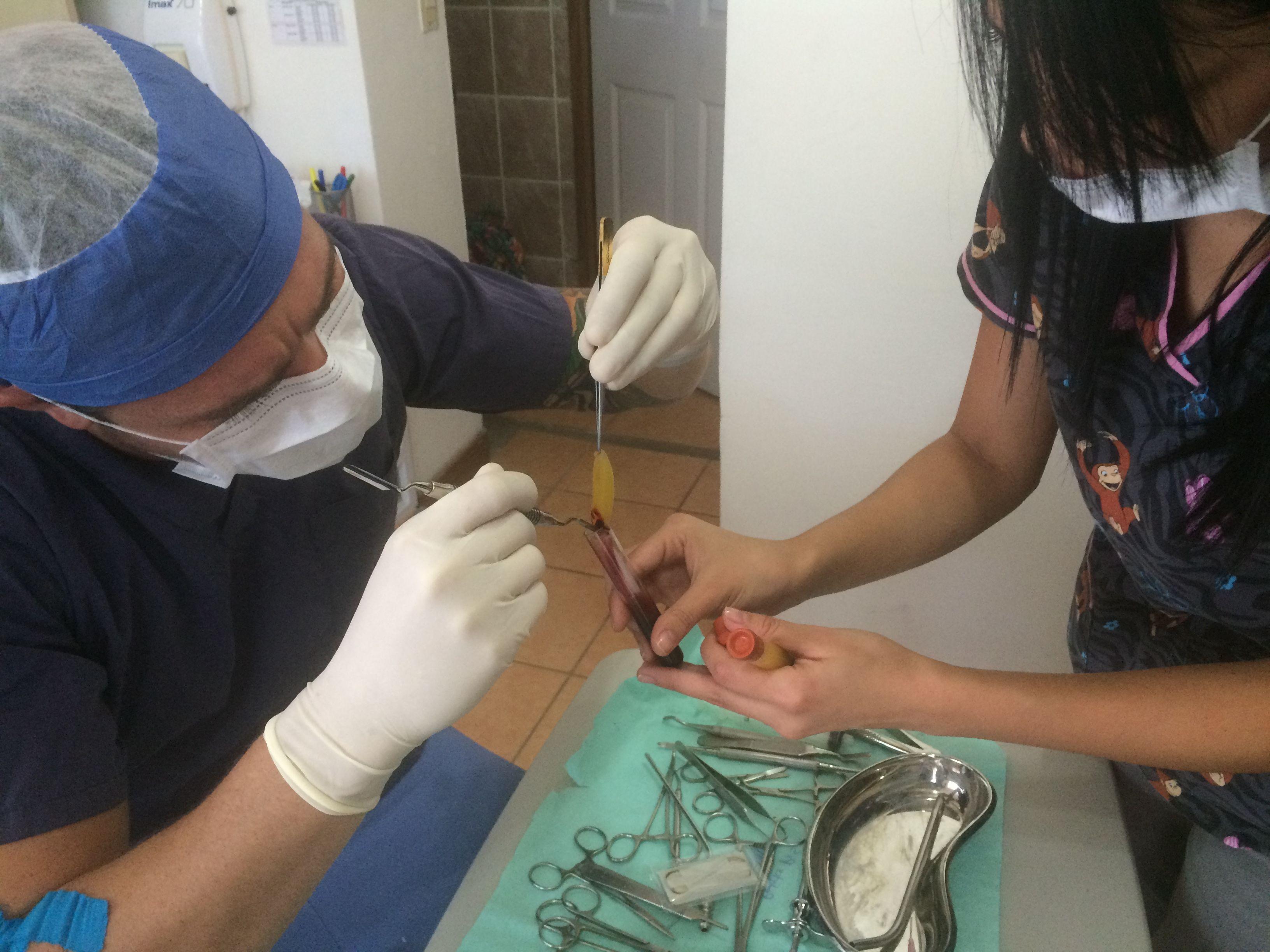 Garabito Dental
